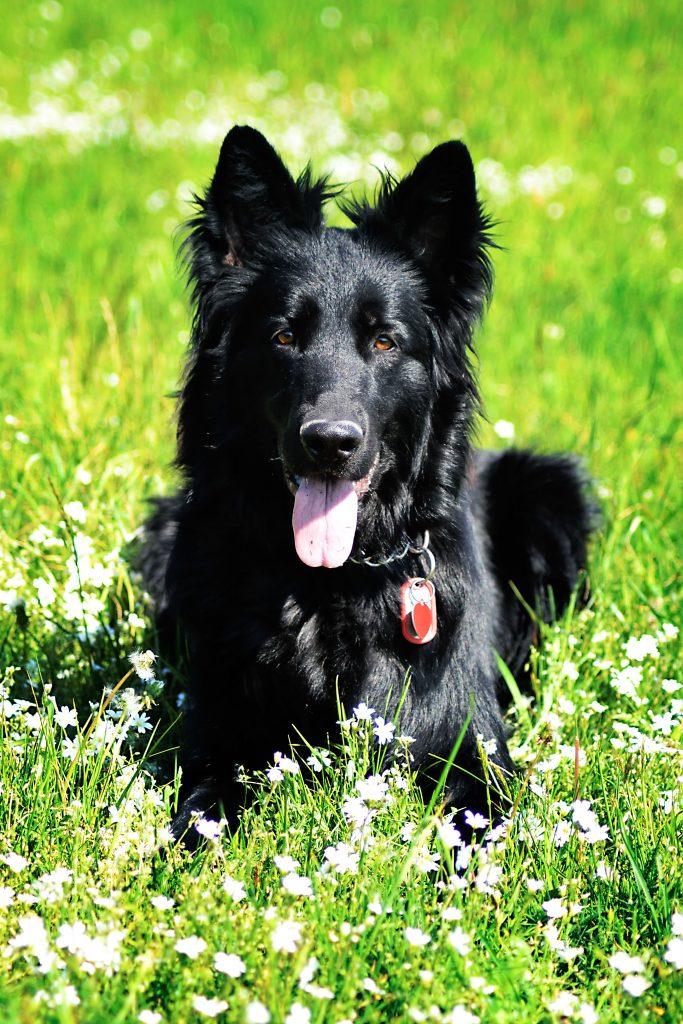 3 - adresówka pies